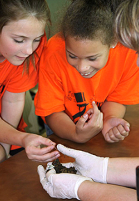 Two fourth grade girls examine red worms during Vermicomposting lesson.